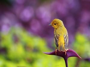 Pájaro amarillo posado