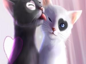 El amor de dos gatitos