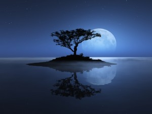 Postal: Reflejo del árbol y la gran luna