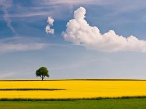 Árbol verde en un campo amarillo