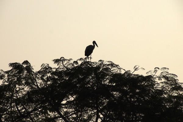 Una cigüeña en lo alto del árbol