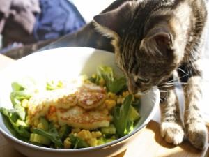Un gato con los bigotes en la ensalada