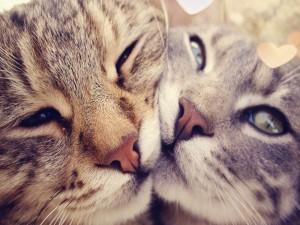 Abrazo de amor gatuno