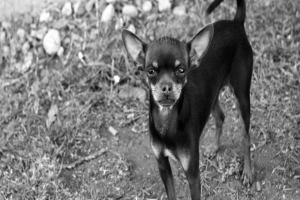 Un pequeño perro callejero