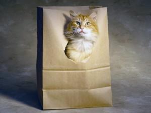 Gato dentro de la bolsa de papel