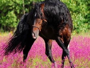 Un precioso caballo entre las flores