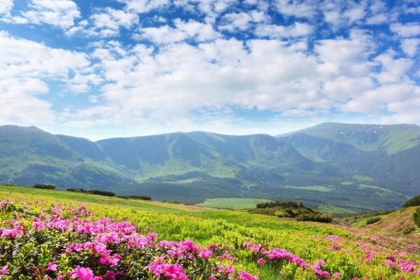 Azaleas en las laderas de las montañas