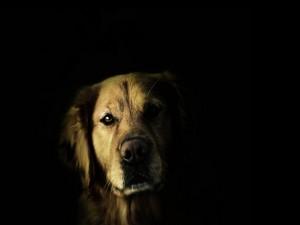 Un perro en las sombras