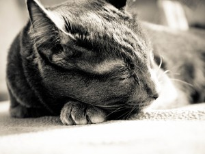 Postal: Un gato dormido