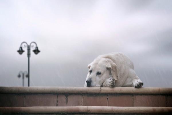 Un perro solo y triste bajo la lluvia