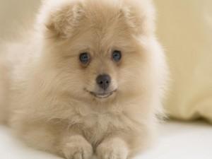 Un perrito peludo