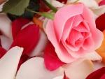 Una rosa sobre pétalos de colores