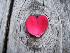 Un pétalo con forma de corazón