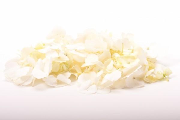 Flores blancas sin tallo