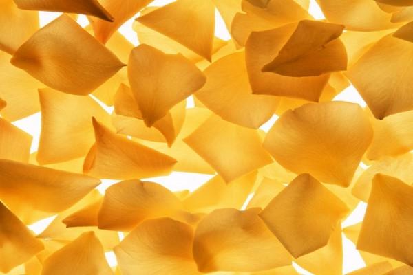 Pétalos de rosas amarillas
