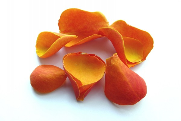 Pétalos naranjas