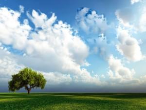 Postal: Un árbol solitario en el campo verde