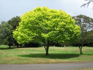 Postal: Árbol con hojas de color verde