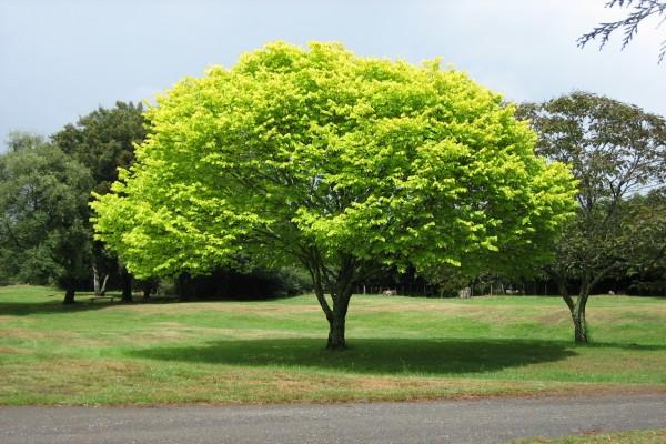 Árbol con hojas de color verde