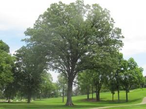 Postal: Árboles en una pradera verde