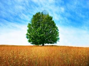 Postal: Árbol verde en un campo seco