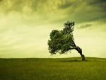 Un árbol inclinado