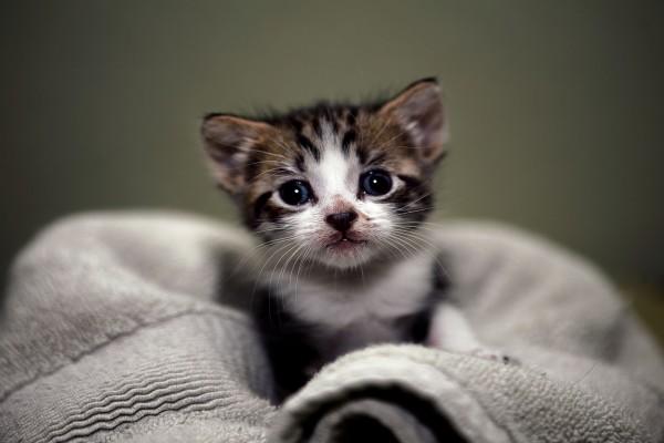 Los ojos brillantes de un pequeño gato