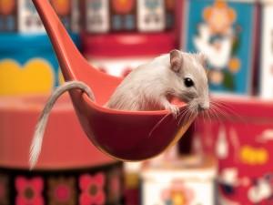 Postal: Un ratoncito en el cucharón