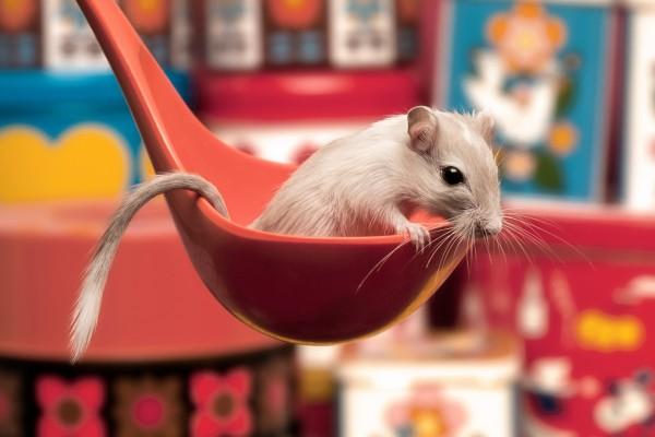 Un ratoncito en el cucharón