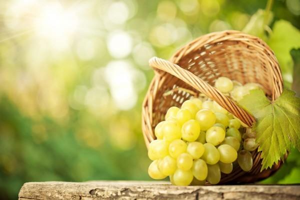 Uvas maduras en la cesta