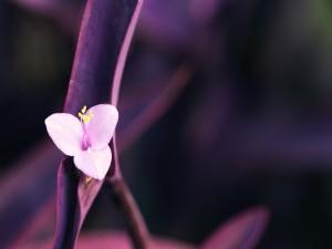 Pequeña y delicada flor rosa