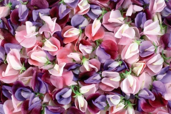 Pétalos de varias flores y colores