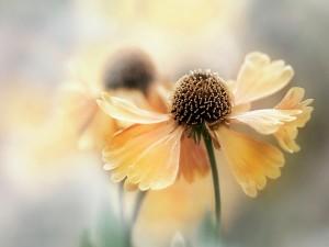 Una flor con bonitos pétalos