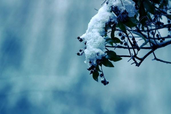 Ramas de un árbol con nieve