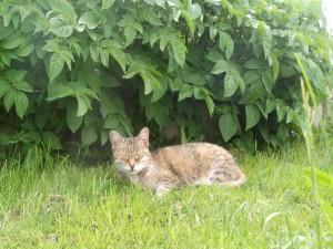 Un gato dormido en la hierba