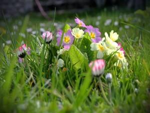 Grupo de flores de colores sobre la hierba