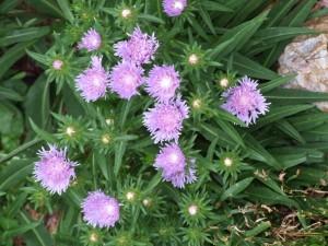 Postal: Planta silvestre con flores de color lila