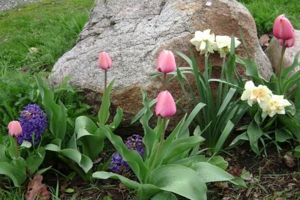 Flores bulbosas