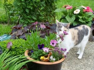 Postal: Una bonita gata entre las flores