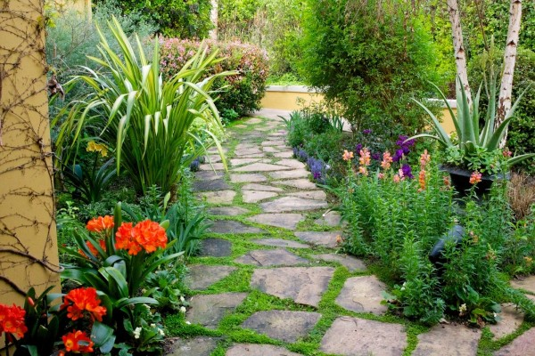 Camino entre flores y plantas
