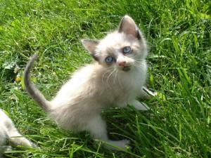 Postal: Un pequeño gato en la hierba