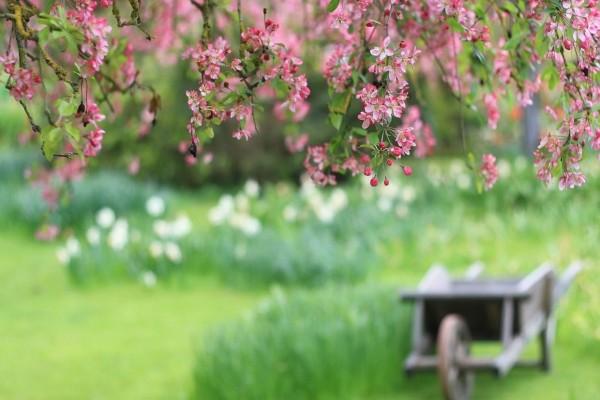 Las pequeñas flores del árbol
