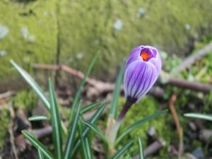Flor con los pétalos cerrados