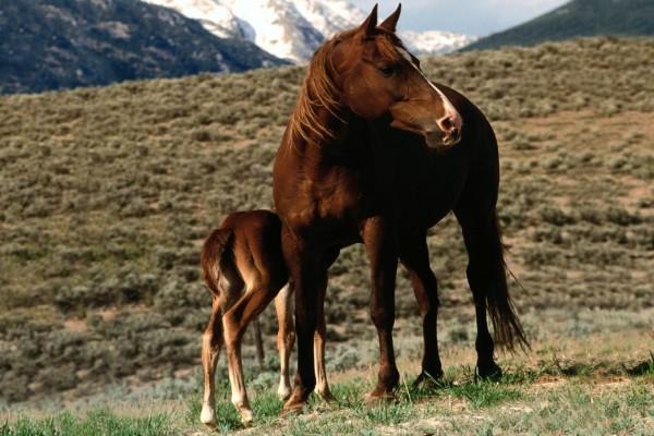Yegua con su cría en las montañas