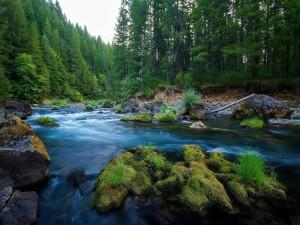 Postal: Río y bosque