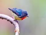Pajarito con plumas de varios colores