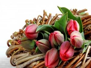 Postal: Tulipanes sobre unas ramas