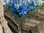 Cesta con jacintos azules