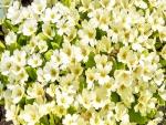 Destacadas flores blancas en primavera