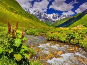 Río entre hierbas y montañas